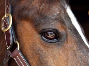 Purdue Eye