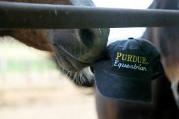 Purdue Nose