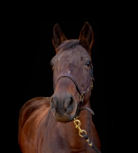 Frazier the horse with black background.